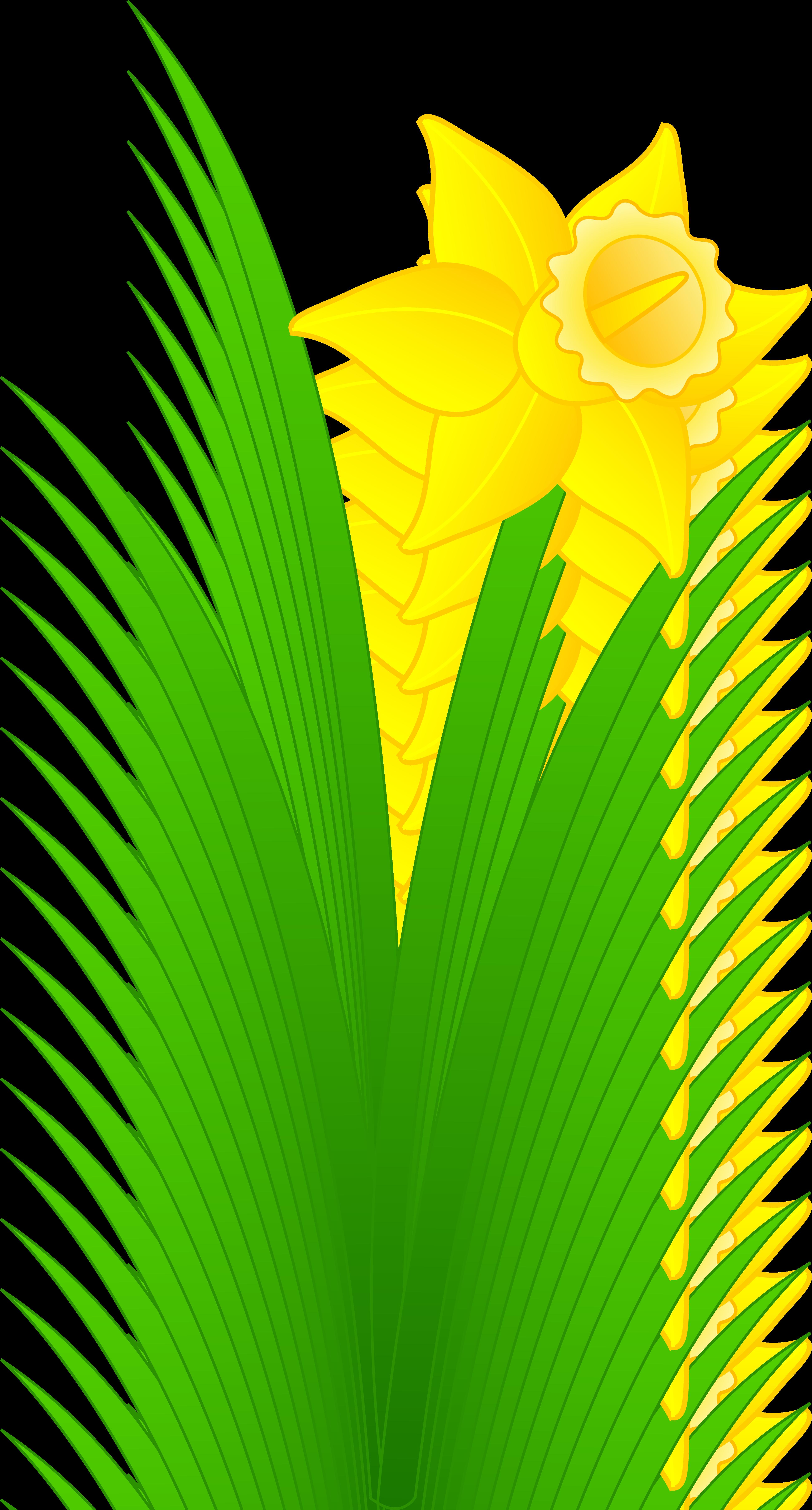 Daffodil Flower Clip Art