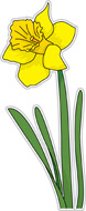 Daffodil Flower Size: 57 Kb From: Flowers