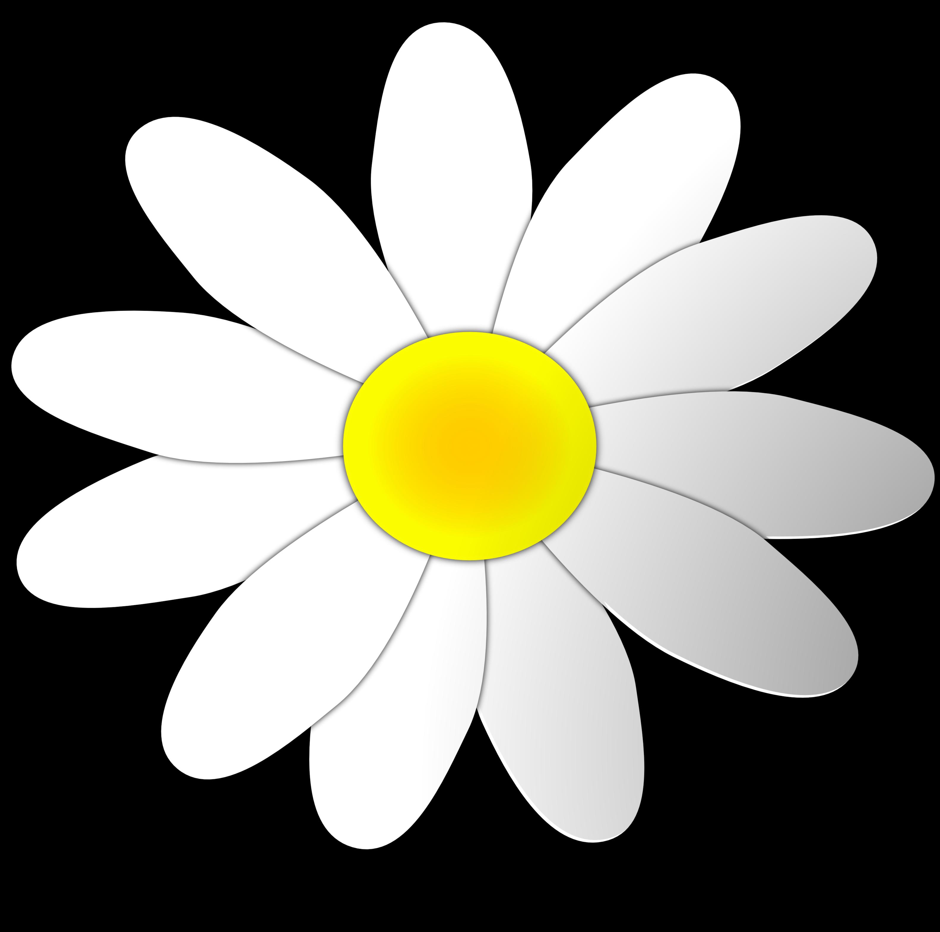 daisy flower clipart #10