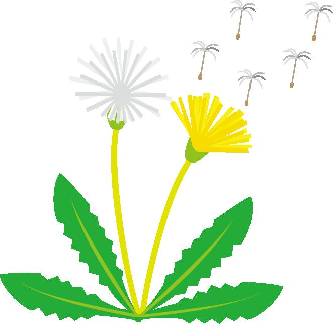 Dandelion Clip Art Clipart Best