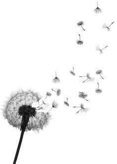 Dandelions. PROJECT / clip art
