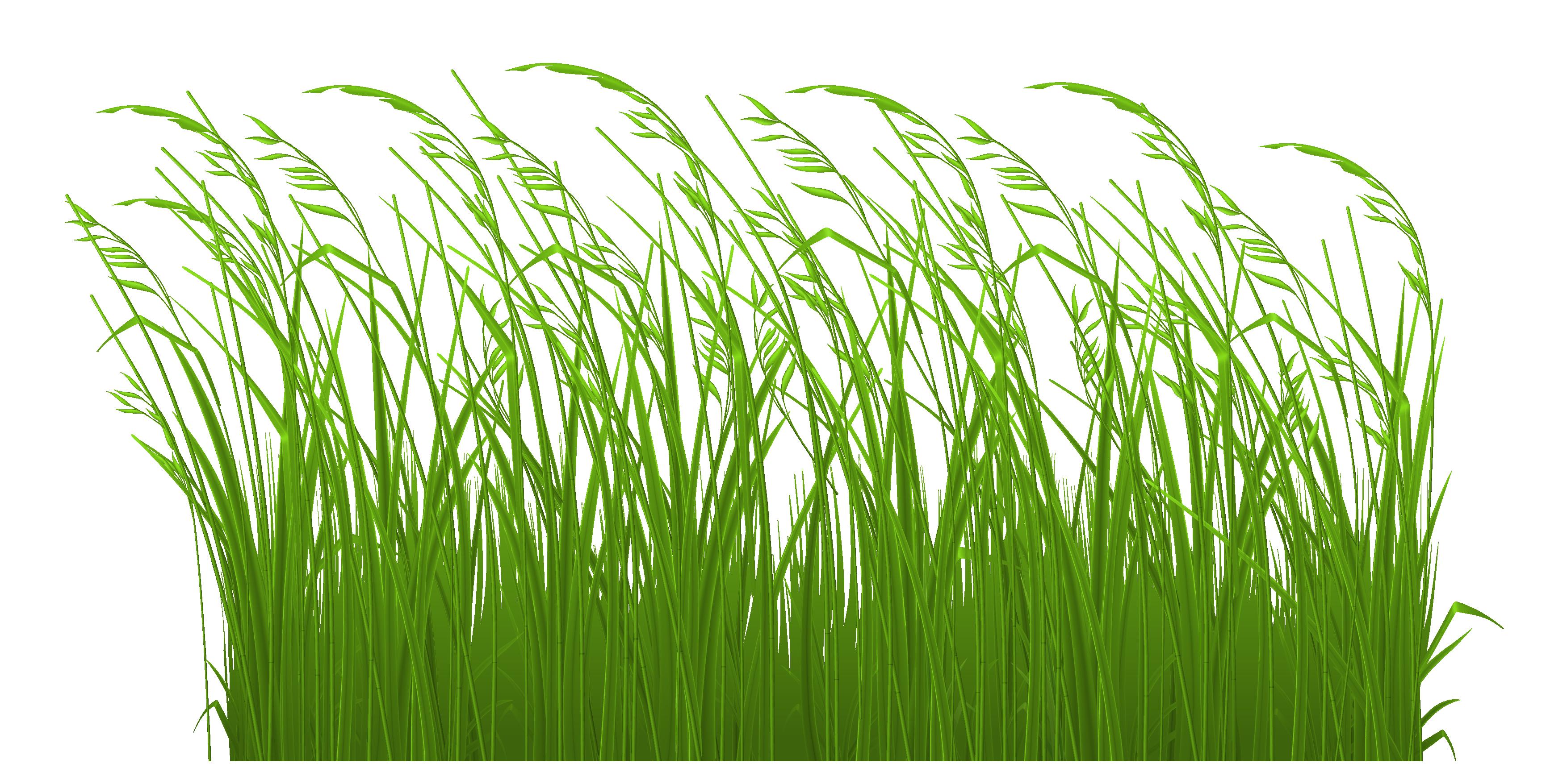 Decorative grass clipart picture 0