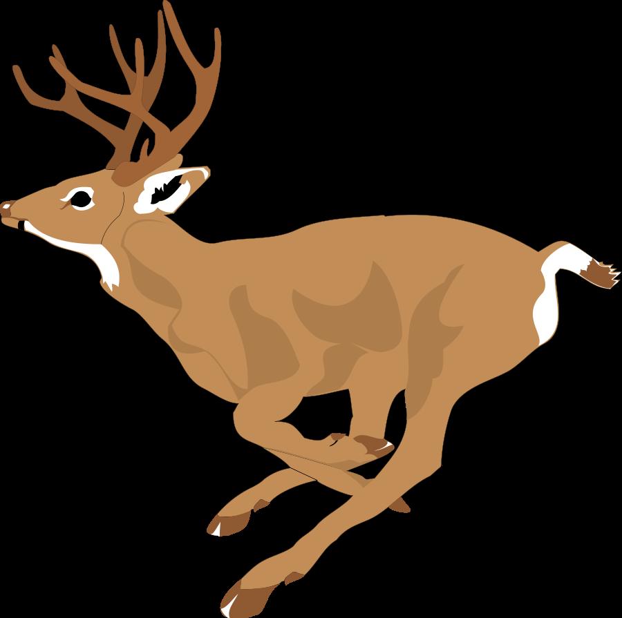 Deer clipart, Deer animals png clip art,