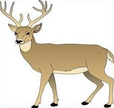 Deer Clipart 10