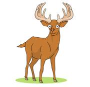 Deer Clipart Size: 71 Kb