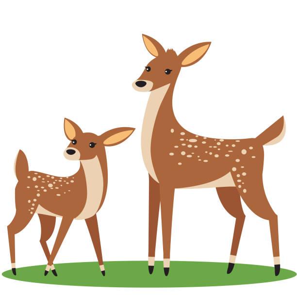 Two Deer vector art illustration