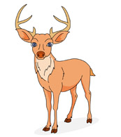 deer with antlers. Size: 77 Kb