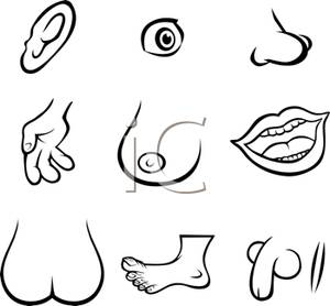 Different Parts of the Human Body In Black and White - Clipart