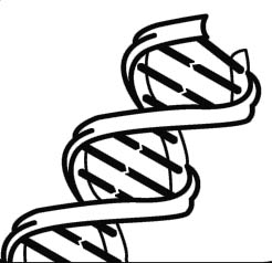 Simple Dna Clipart #1
