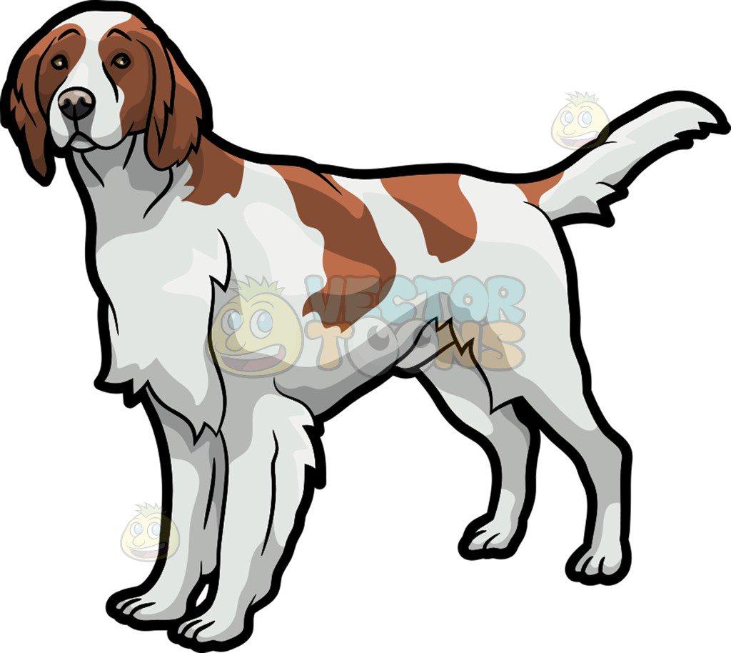 An observant Irish Setter pet dog