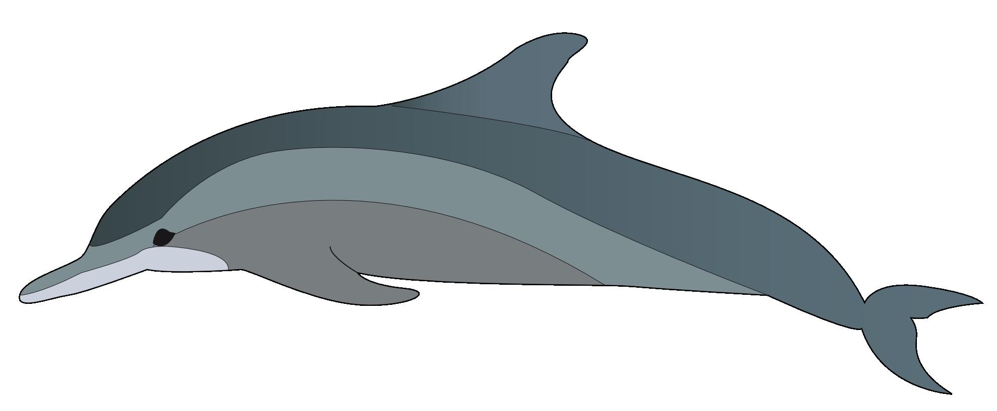 Dolphin Clipart Dolphin 1979px