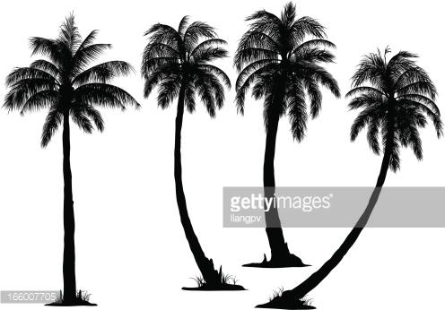 doodle coconut tree clipart