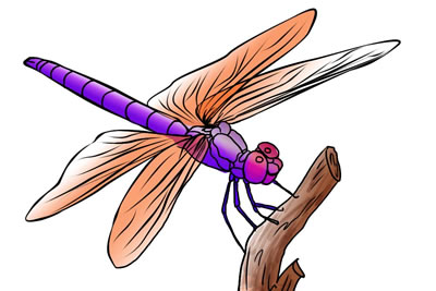 Free Dragonfly Clip Art 4 hdclipartall.com