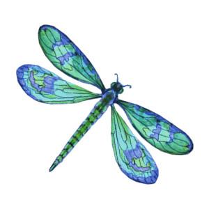 Dragonfly tattoo design .