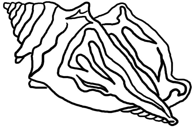 ... Drawing Of A Conch - ClipArt Best ...