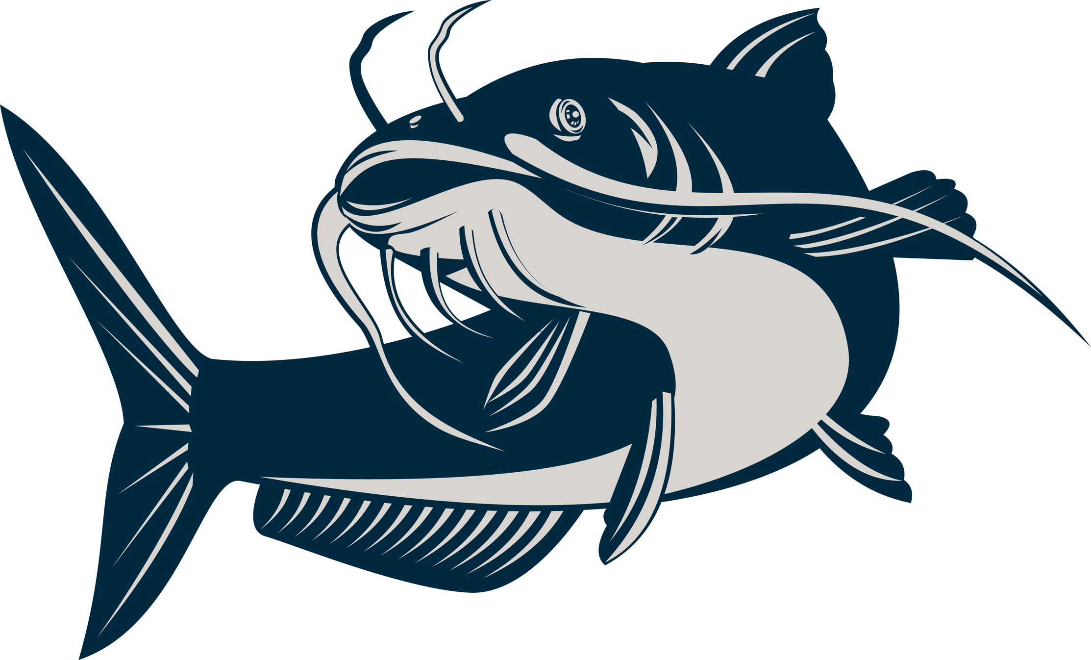 ... Drawings Of Catfish | Free Download Clip Art | Free Clip Art | on .