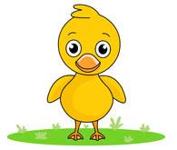 mallard duck clipart. Size: 46 Kb