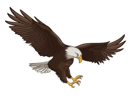 Vector illustration of a Bald Eagle, isolated on a white background