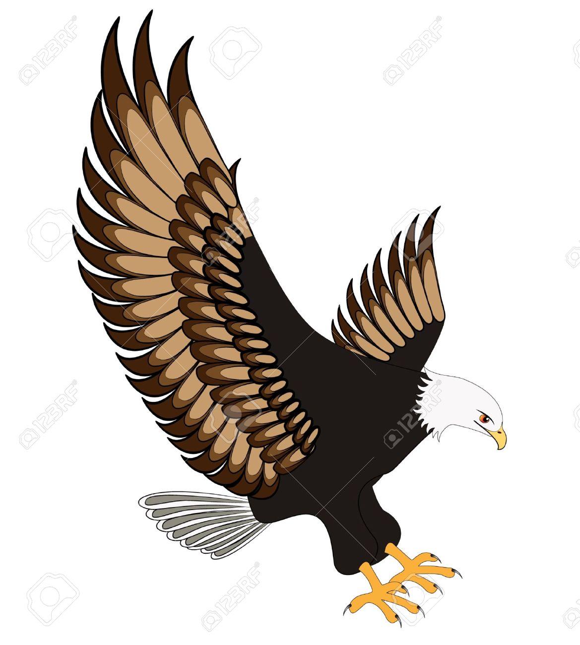 eagle flying: illustration flying eagle insulated on white background