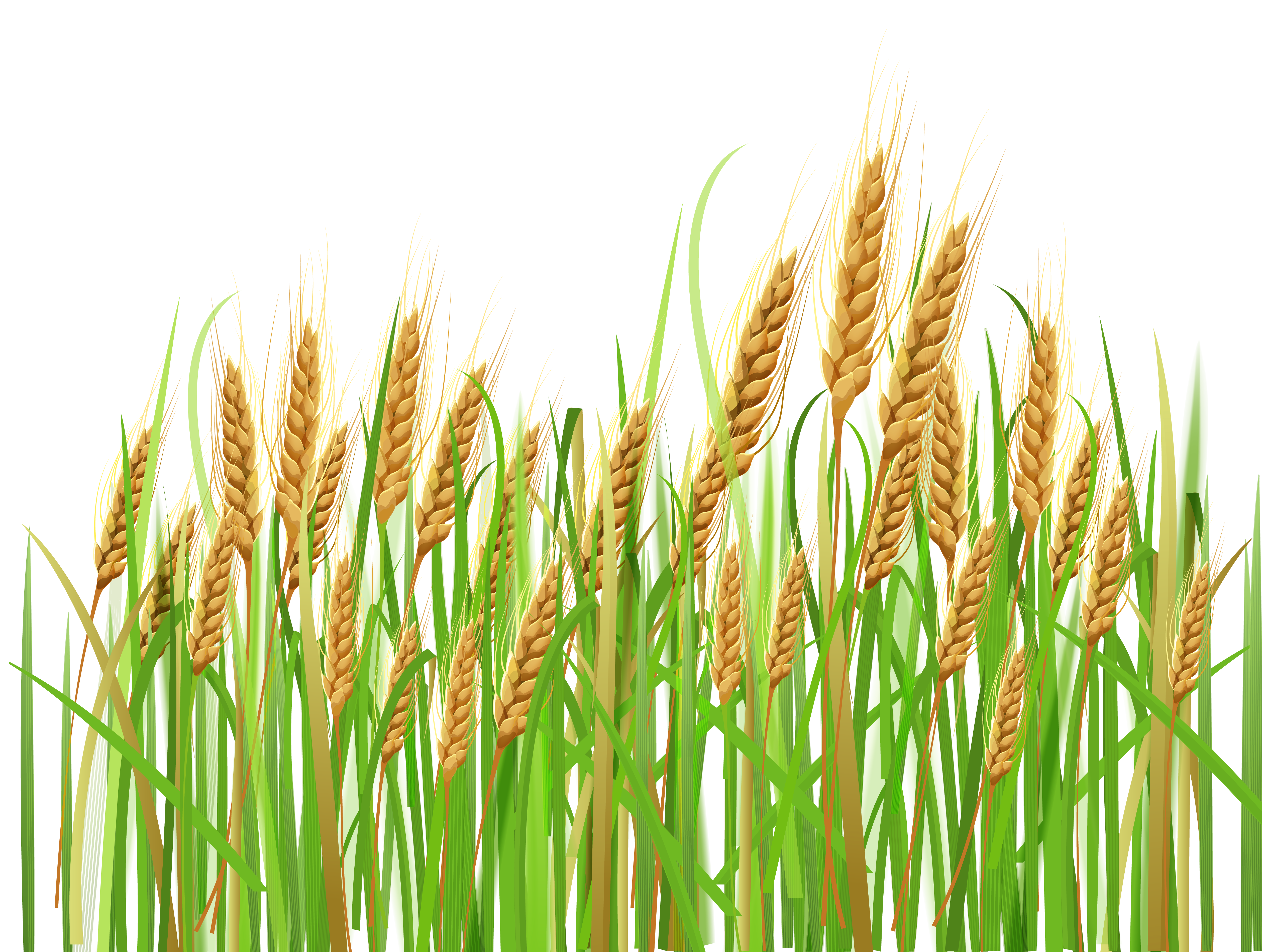 Ears of Wheat PNG Clipart