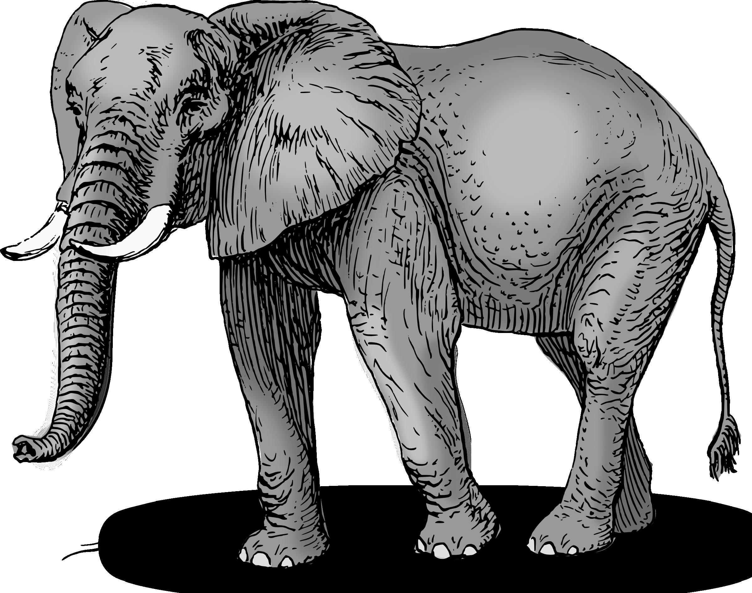 Elephant clip art image 3