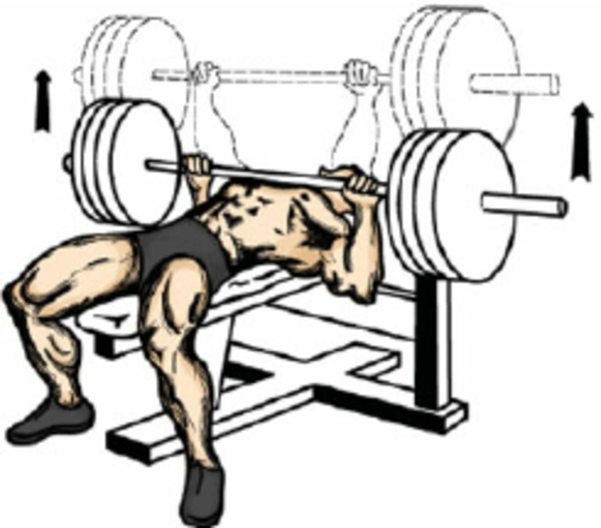 ( a ) General principle of bench press exercise. ( b ) Table of  morphological characteristics of athletes performing BP experiments: height  ( H ), body mass ClipartLook.com