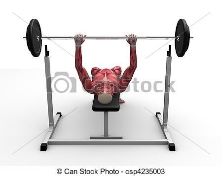 male workout - bench press - csp4235003