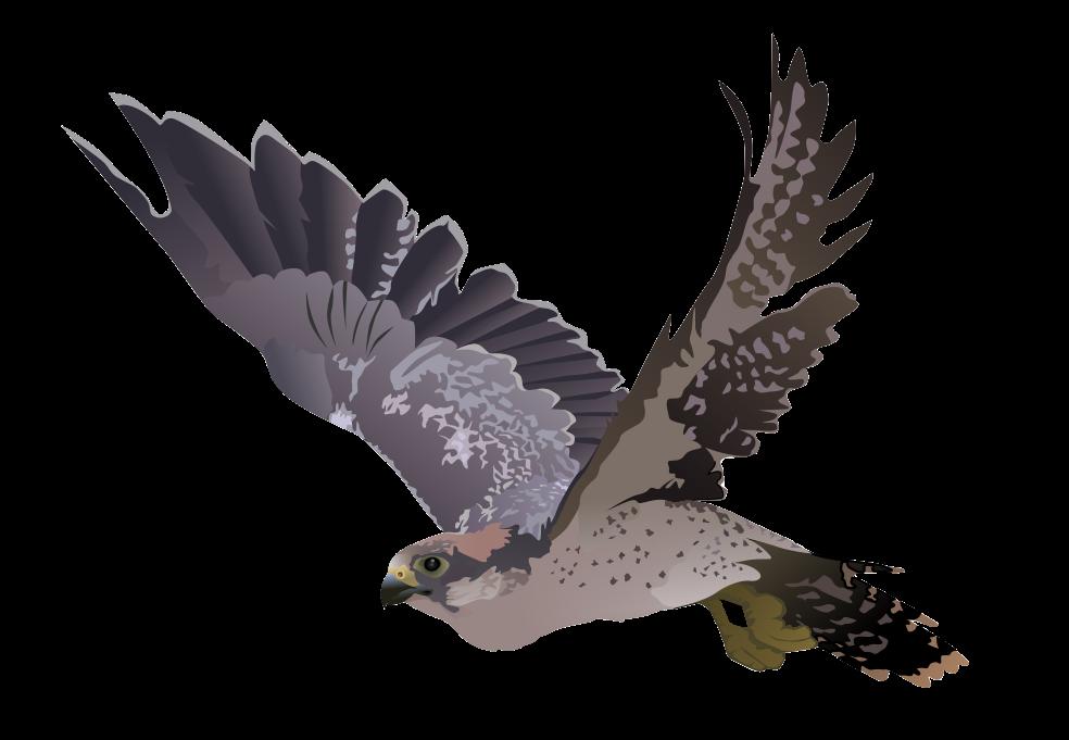 Falcon Clipart Realistic Falcon Clip Art