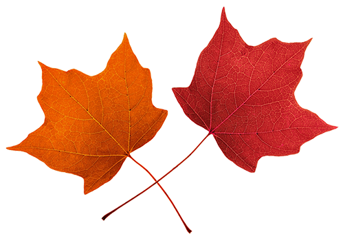 Fall Leaves Clip Art Beautiful Autumn Clipart Amp Graphics