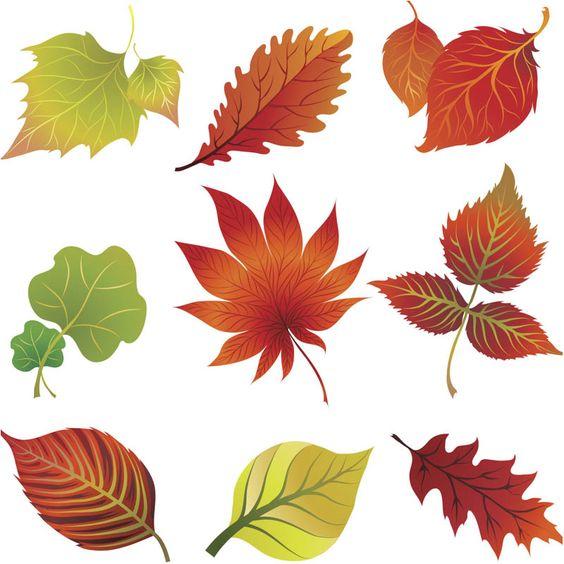 Fall leaves clip art vector