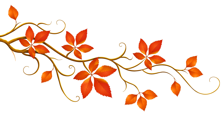 Fall leaves fall autumn free .