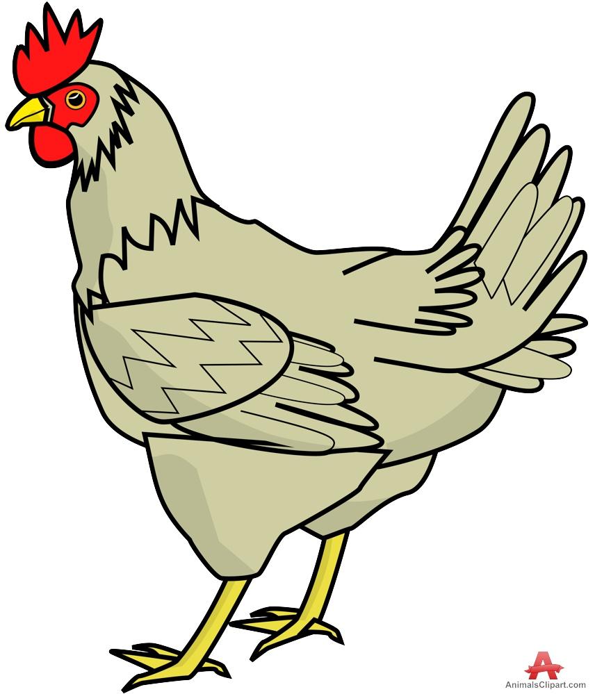 Farm Chicken Clipart