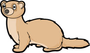 Ferret Clipart Size: 57 Kb From: Mammal Clipart