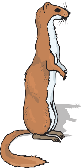 Ferret. Download this image as:
