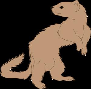 Ferret Looking Back Clip Art