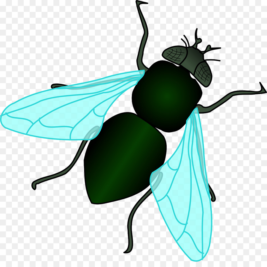 Housefly Insect Clip art - Green flies
