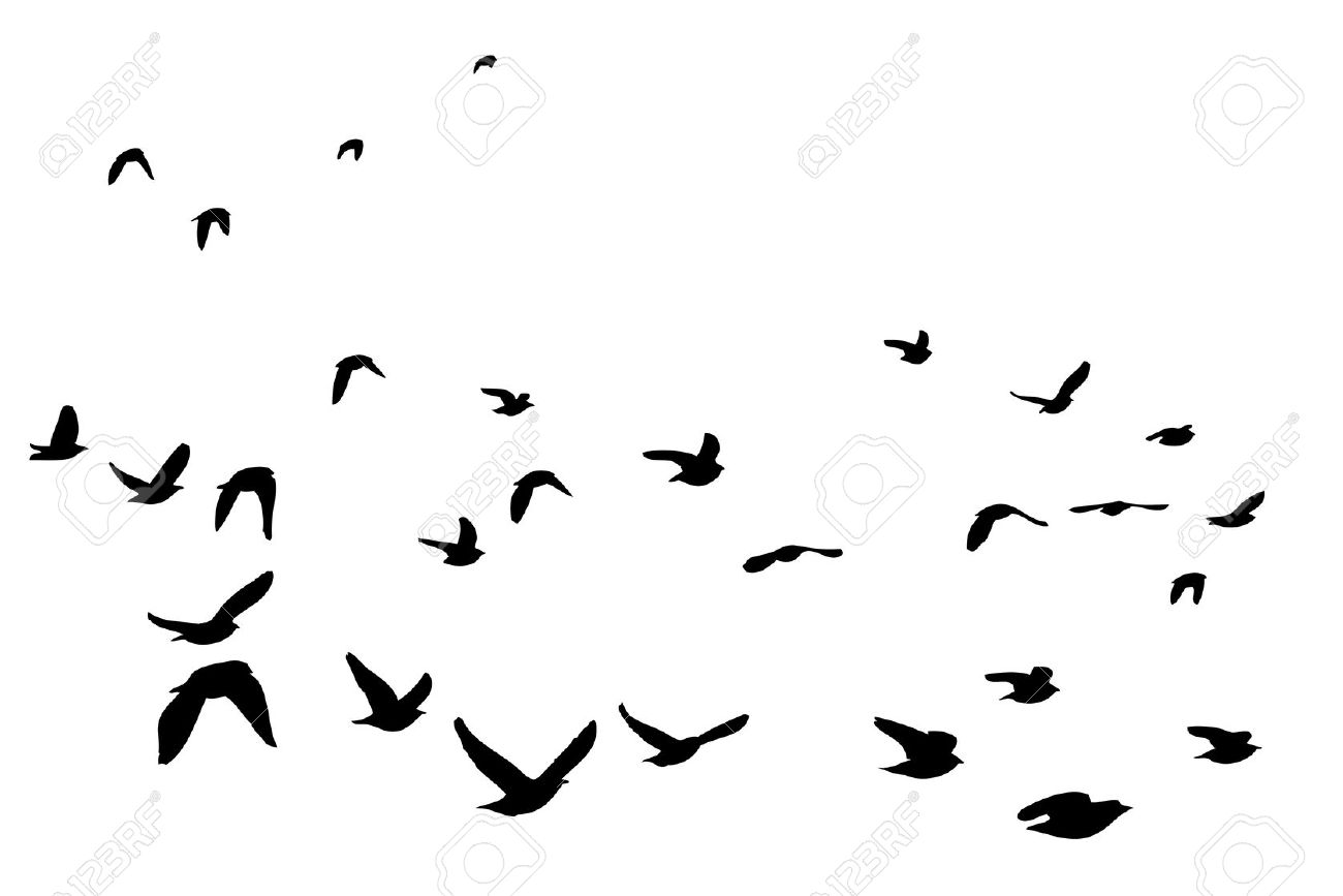Flock Of Birds Clipart-Clipartlook.com-1300