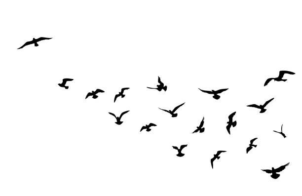 Bird flock flying over blue sky background. Animal wildlife. vector art  illustration
