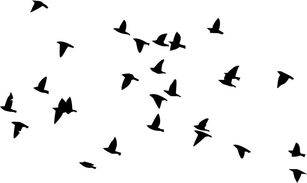 Flock Of Birds clipart bird silhouette #3