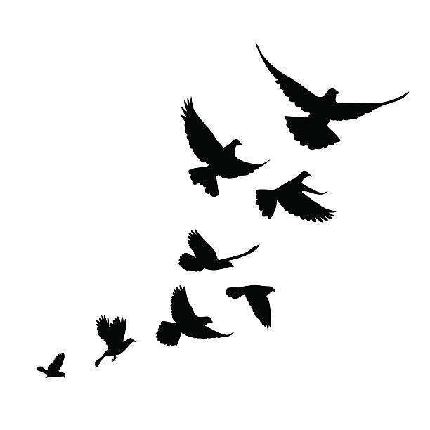 Flock Of Birds Clipart Stencil Art #4