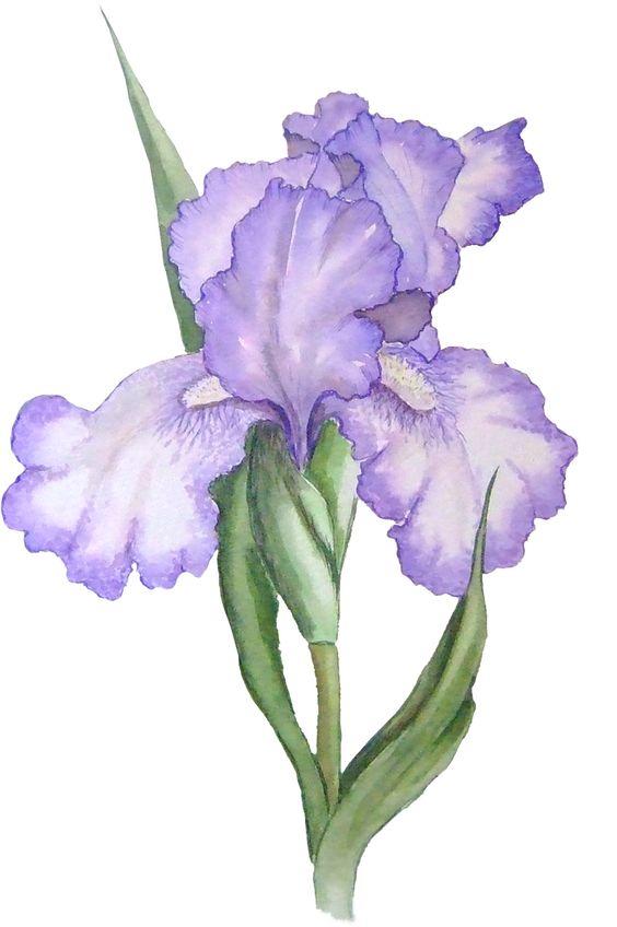 flower clip art free   Download Iris Flower in PSP Tube Format