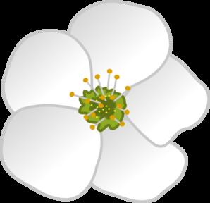 Flower Clip Art. Magnolia Clipart