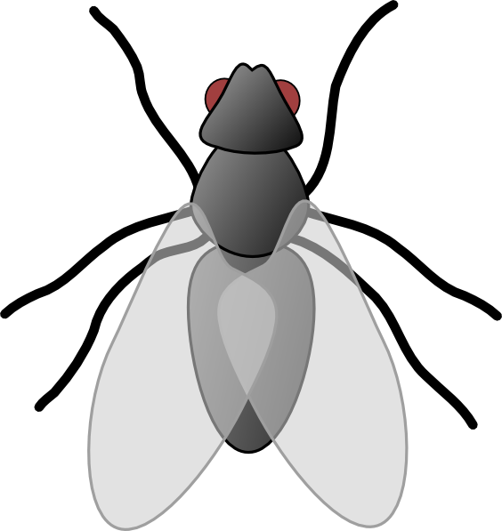 fly clipart