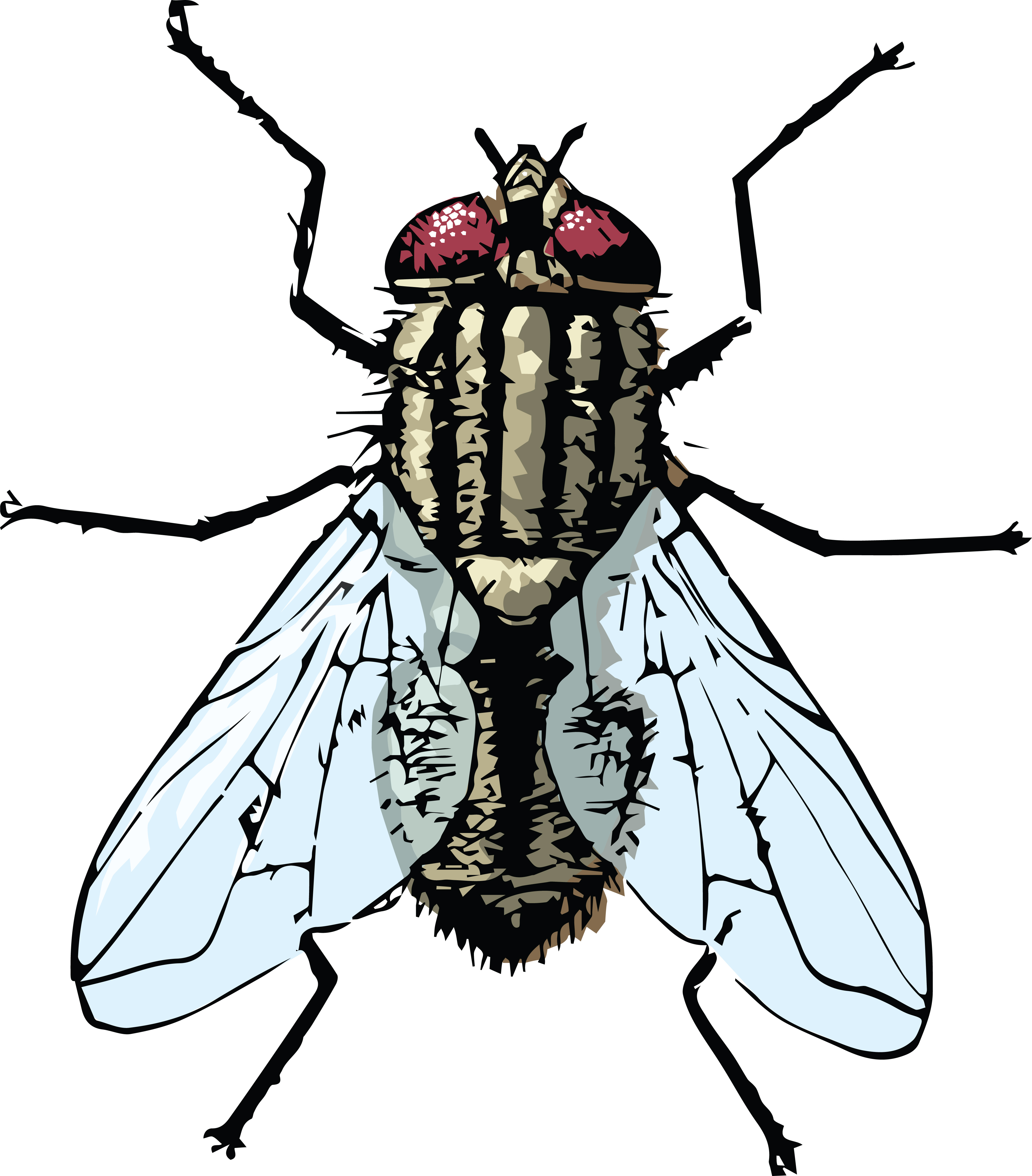 Fly Clipart-Clipartlook.com-4000