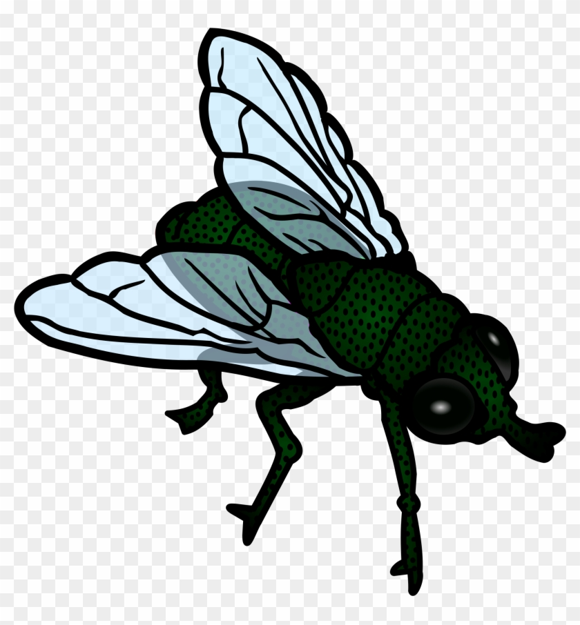 Fly Clip Art - Fly Clipart Png