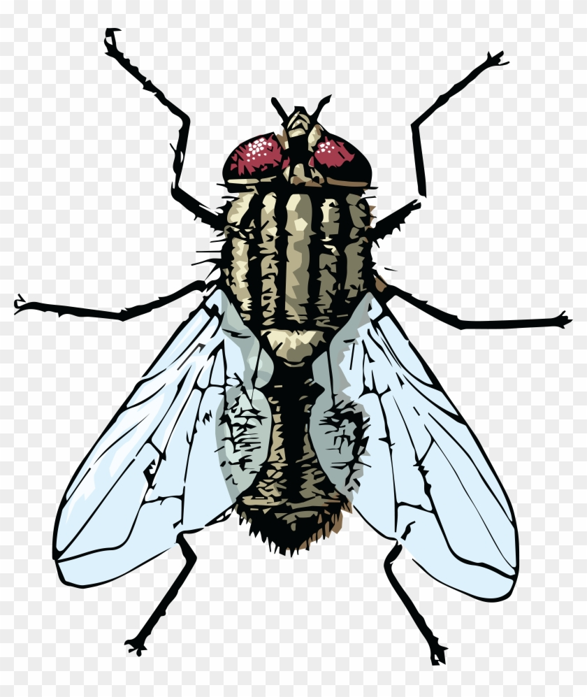 Free Clipart Of A House Fly - Clipart Of A Fly