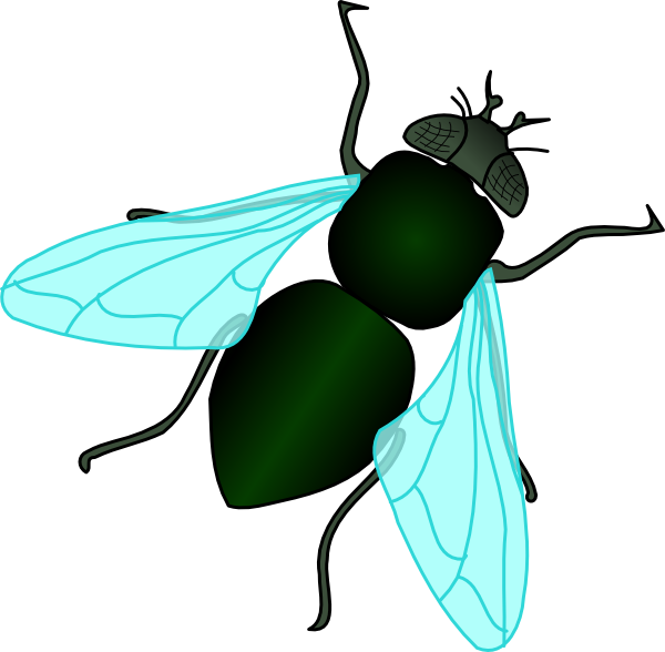 House Fly Clipart #1