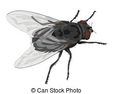 . ClipartLook.com Insect fly isolated on white background. Vector.