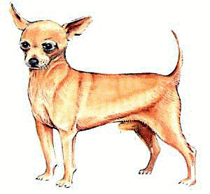 Free Chihuahua Clipart Free Clipart Graphics Images And Photos