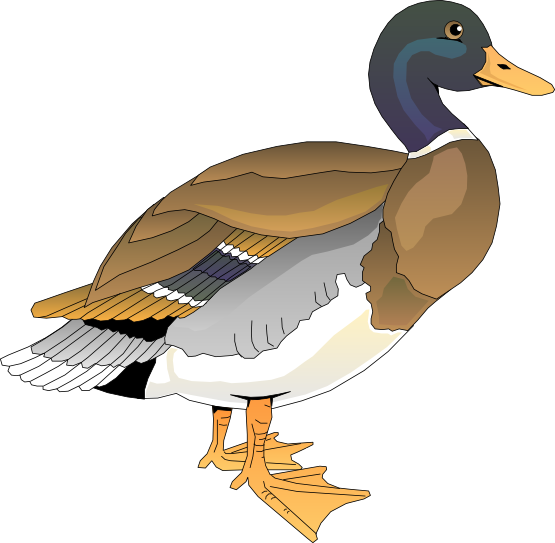 Free Colorful Duck Clip Art